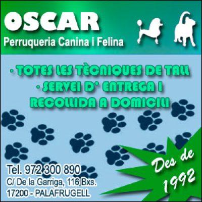 Perruqueria Canina Palafrugell Oscar